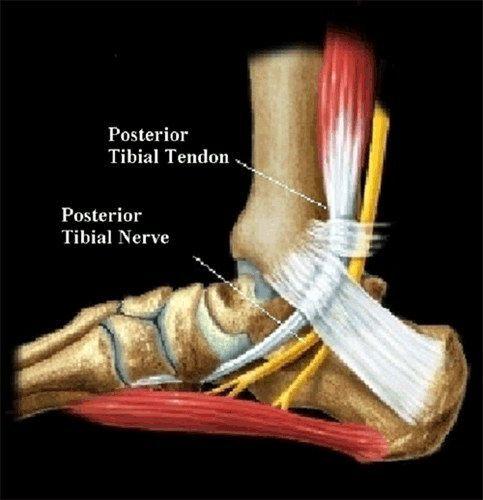 a lábak ízületeinek szalagjai és inak kezelése